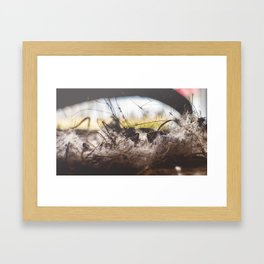 Micro Haven Framed Art Print