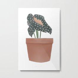 Maculata Begonia Plant Metal Print