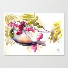 Silvereye Canvas Print