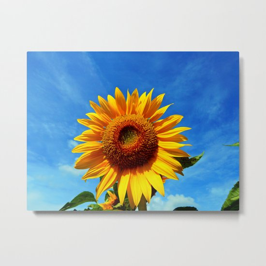 Stunning Sunflower Metal Print