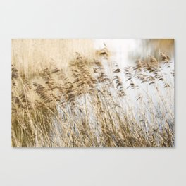 Riverside Grass Canvas Print