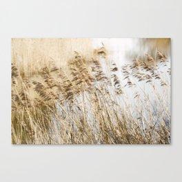 Riverside Grass Canvas Print