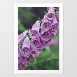 Purple Foxgloves Art Print
