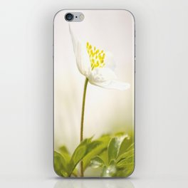 Wood Anemone Blooming in Forest iPhone Skin