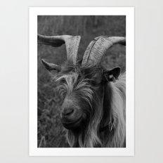 Billy-Goat no.2 Art Print
