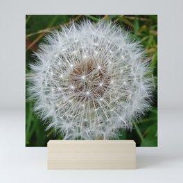 Dandelion clock Mini Art Print