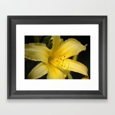 Yellow beauty #2 Framed Art Print