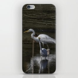 Three Great Egrets Among the Ducks, No. 2 iPhone Skin