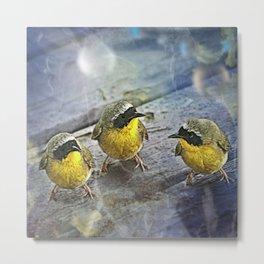 Yellowthroat Bird Metal Print