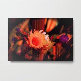 """""""Susan's Cactus Flower Dream #130"""" Metal Print"""