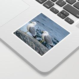 Seagulls, Norway Sticker