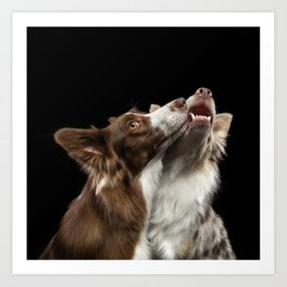 Two Border Collie dog Art Print