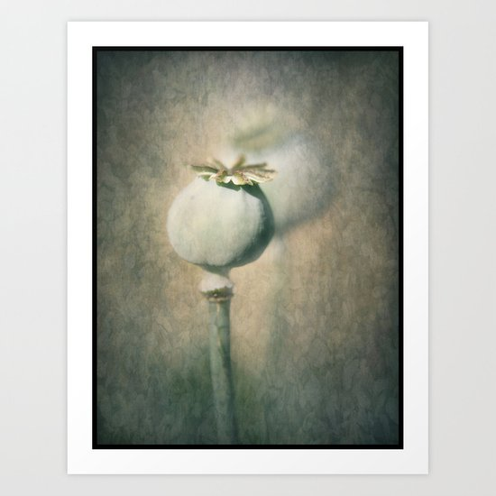 Perfect Poppy Pod Art Print