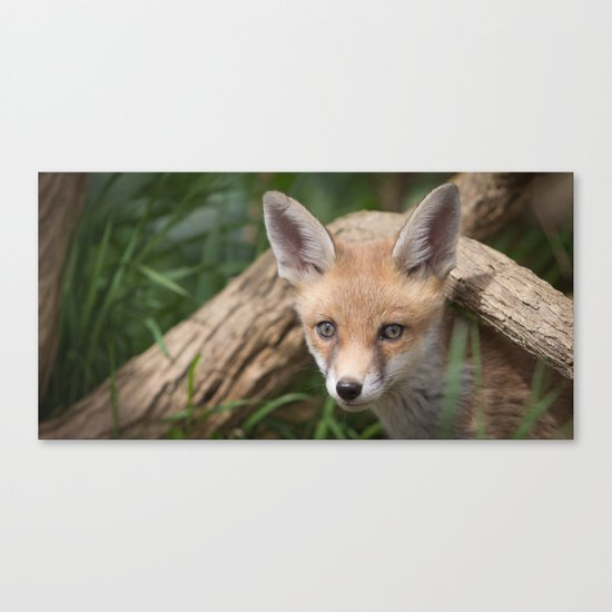Fox Cub Canvas Print