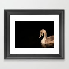 Young Swan Framed Art Print