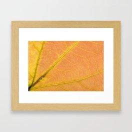 Sassafras Leaf Framed Art Print