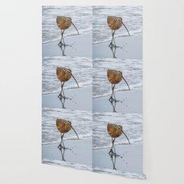 Long Billed Curlew Wallpaper