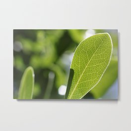 leave-leaf Metal Print