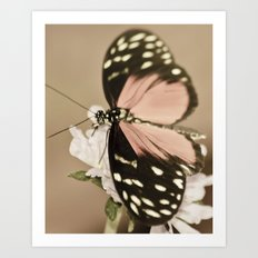 The Pink Butterfly Art Print