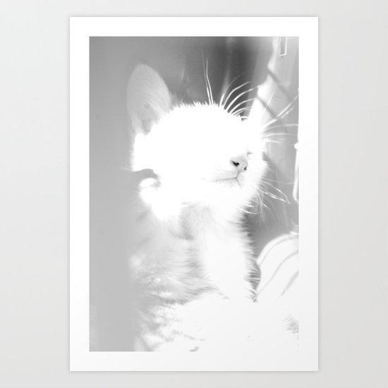 Bliss Kitten 4 Art Print