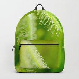 Green leaves of sundews Backpack