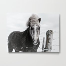 Winter Hest. Metal Print