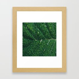 leaf dew drops Framed Art Print