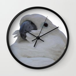 Ruffled Feathers Of A Blue Eyed Cockatoo Isolated Wall Clock