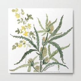 Botanical: Cannabis / Hemp Metal Print