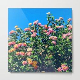 Colorful Flowers In Sapphire Blue Sky Metal Print