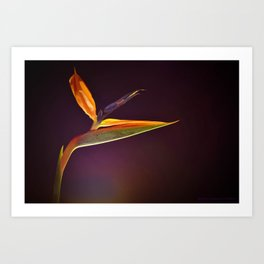Strelizia - paradise bird flower Art Print