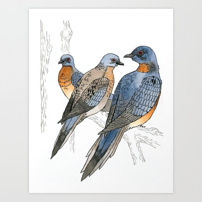 Passenger Pigeons Art Print