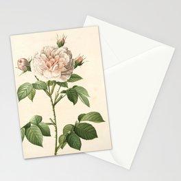 Rosa Alba Regalis Stationery Cards