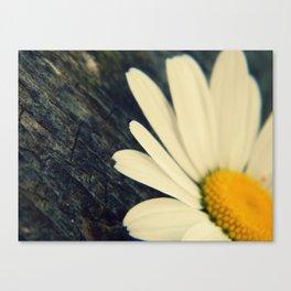 daisies, daisies, daisies. Canvas Print