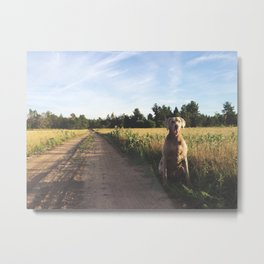 Farm Field with Charley Metal Print