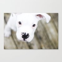 boxer Canvas Prints featuring Boxer by sara montour
