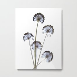 flowers on white background. botanical prints framed. Metal Print