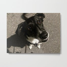 Max the Dog wants Candy Metal Print