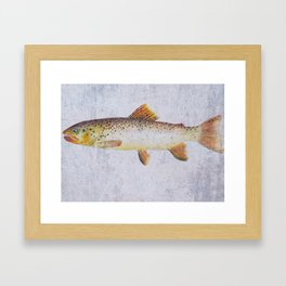 Brown Trout Framed Art Print