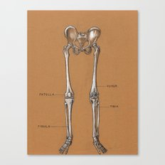 Jesse Young's Human Anatomy Drawing of Skeletal Structure of the Lower Body (Circa 2005) Canvas Print