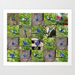 Blue Wren collage Art Print