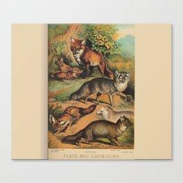 Vintage Foxes Canvas Print