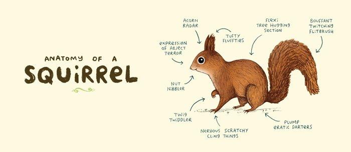 Anatomy of a Squirrel Kaffeebecher