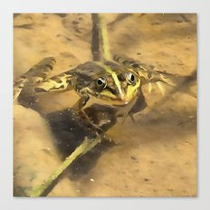 Marsh Frog Canvas Print