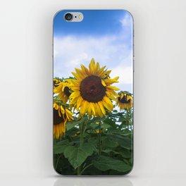 Nodding Sunflowers iPhone Skin