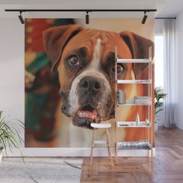 boxer's face weeping of friendly behavior Wall Mural