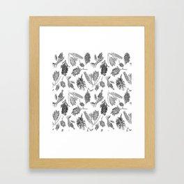 Black and White Australian Native Flowers Framed Art Print