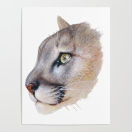Ares Cougar Poster