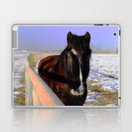 Mahogany Bay Draft Horse Laptop & iPad Skin