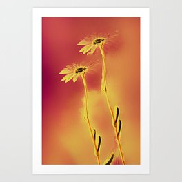 Two Daisies Art Print